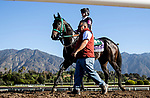 OCT 28: Breeders' Cup Juvenile Turf Sprint entrant Another Miracle, trained by Gary Contessa,  at Santa Anita Park in Arcadia, California on Oct 28, 2019. Evers/Eclipse Sportswire/Breeders' Cup