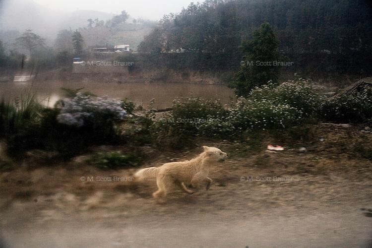 A dog runs along a dirt road above the Hong River in mountainous rural southern Yunnan Province, China, near the Vietnam border.