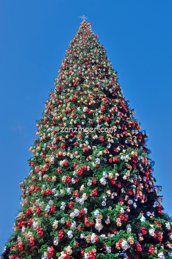 Tall 90 Foot, Christmas Tree, Xmas, Holiday, Decorations, Tree Decorated,