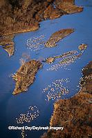 00882-03018 Sandhill Cranes (Grus candensis) aerial above Platte River near Kearney   NE