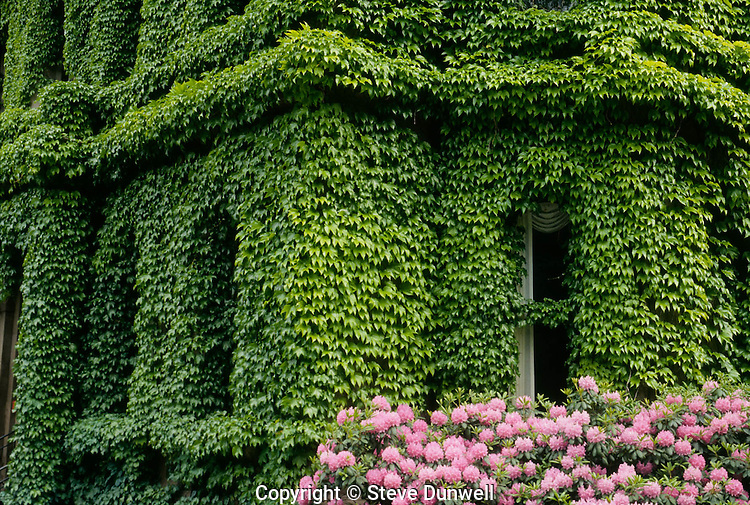 House covered with ivy, Back Bay, Boston, MA