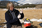 Elk research conducted in Rocky Mountain National Park, Colorado, USA, including contraceptive drug tests and tests for chronic wasting disease, research complimenting the park's efforts to reduce size of elk herds, which are damaging habitat through over-grazing, January, 2008. EDITORIAL ONLY