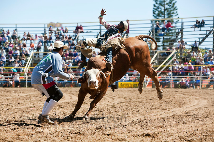 Bull rider and rodeo clown at Mareeba Rodeo.  Mareeba, Queensland, Australia