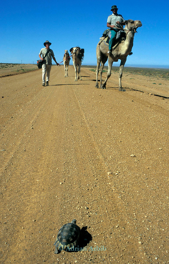 Explorer Benedict Allen on his journey through the Namib Naukluft  desert as he travelled  from South Africa to Angola, 1,700 miles. Skeleton Coast, Namibia...