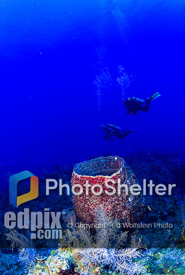 24 July 2015: SCUBA Divers swim over a barrel sponge (Xestospongia muta) at Hammerhead Hill, on the North Shore of Grand Cayman Island. Located in the British West Indies in the Caribbean, the Cayman Islands are renowned for excellent scuba diving, snorkeling, beaches and banking.  Mandatory Credit: Ed Wolfstein Photo *** RAW (NEF) Image File Available ***