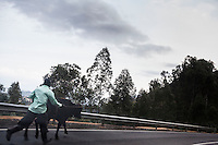 A man wrangles his cow toward the auction site. Some cattle are sold on the road before they reach the auction site in Kivuruga, Rwanda. Photo by  Brendan Bannon. March 5, 2014