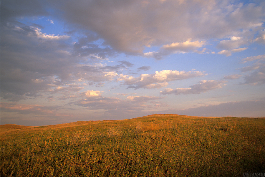 Prairie grasses glow under a setting sun in Badlands National Park, South Dakota.