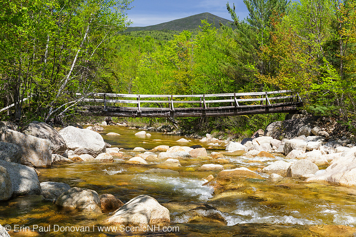 North Fork junction footbridge, which crosses the East Branch of the Pemigewasset River along the Thoreau Falls Trail in Pemigewasset Wilderness of Lincoln, New Hampshire USA. This bridge is supported by two large white pines.