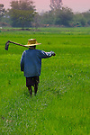 A rice farmer returrning home after a days manual toil in his rice fields, Ratchaburi province, Thailand