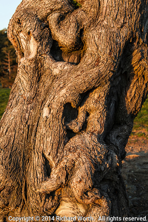 Do you see the face in this twisted tree trunk?  Or just a twisted tree trunk?