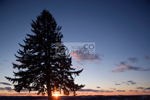 SOLITARY LONE FIR TREE SILHOUETTE