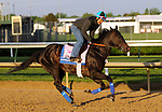April 27, 2019 : Serengeti Empress works out at Churchill Downs, Louisville, Kentucky, preparing for a start in the Kentucky Oaks. Owner Joel Politi, trainer Thomas M. Amoss. By Alternation x Havisham (Bernardini)  Mary M. Meek/ESW/CSM