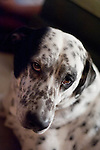 Austin-Dogs