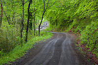 Forest road in the Ozark National Forest in Arkansas