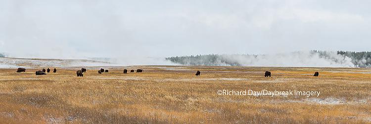 67545-09019 Bison near Midway Geyser Basin, Yellowstone National Park, WY