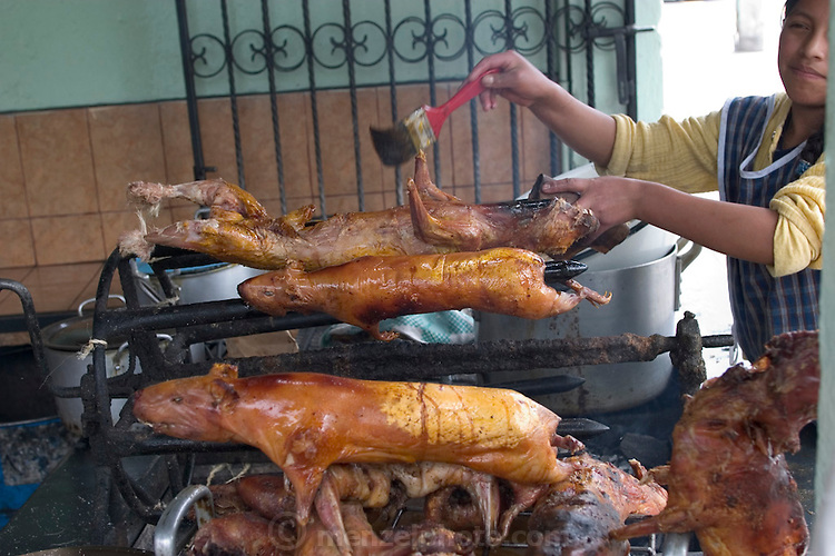 Spit-roasted cuy (guinea pig) is a popular food all over Ecuador, but are an especial treat in Ambato, Ecuador, where plump roasted cuy are served in great numbers in shops around the city. Cuy are also raised by families in their homes and are eaten for special occasions, like Easter. (Supporting image from the project Hungry Planet: What the World Eats.)