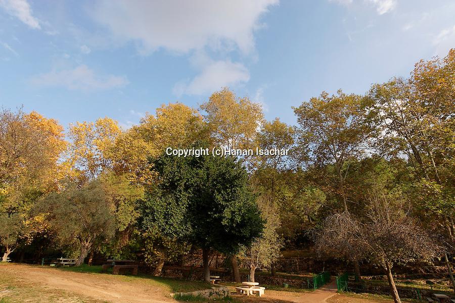 Israel, Jerusalem Mountains. Ein Hemed National Park