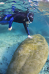 Touching Manatee, Three Sisters Spring