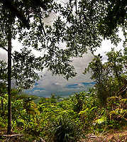 Rain Forest_gallery