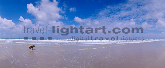 www.travel-lightart.com, ©Paul J. Trummer, Asia, Countries, Country, Geography, Thailand, Asien, Geografie, Länder, Siam, Staat, Staaten, Ko Chang, near Trat, White Sand Beach, Gewässer, Golf von Siam, Golf von Thailand, Landschaft, Landschaftsform, Landschaftsformen, Meer, Meere, Südchinesische See, Südchinesisches Meer, bodies of water, body of water, Gulf of Siam, Gulf of Thailand, landscape, landscape form, landscape forms, landscapes, sea, seas, south China sea, beaches, coast, coastal landcsapes, coastline, coastlines, coasts, sand, sandy beach, sandy beaches, Küste, Küsten, Küstenlandschaft, Meeresstrand, Sandstrand, Sandstrände, Straende, Himmel, Natur, Naturelemente, Wolke, Wolken, cloud, clouds, elements, nature, skies, sky, island, islands, insel, Inseln, animal, animalia, animals, crossbread, dog, dogs, living being, mammal, mammals, predator, predators, vertebrate, vertebrates, warm blooded animals, warm blooded-animal, Fauna, Fissipedia, Hund, Hunde, Hündin, Landraubtier, Landraubtiere, Lebewesen, Mammalia, Mischling, Rüde, Säuger, Säugetier, Säugetiere, Tierbild, Tierbilder, Vertebrata, Warmblüter, Wirbeltier, Wirbeltiere