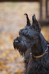 Giant Schnauzer Shopping cart has 3 Tabs:<br />