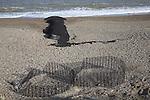 Experimental flexible membrane textile used to construct a beach groyne Dunwich, Suffolk, England
