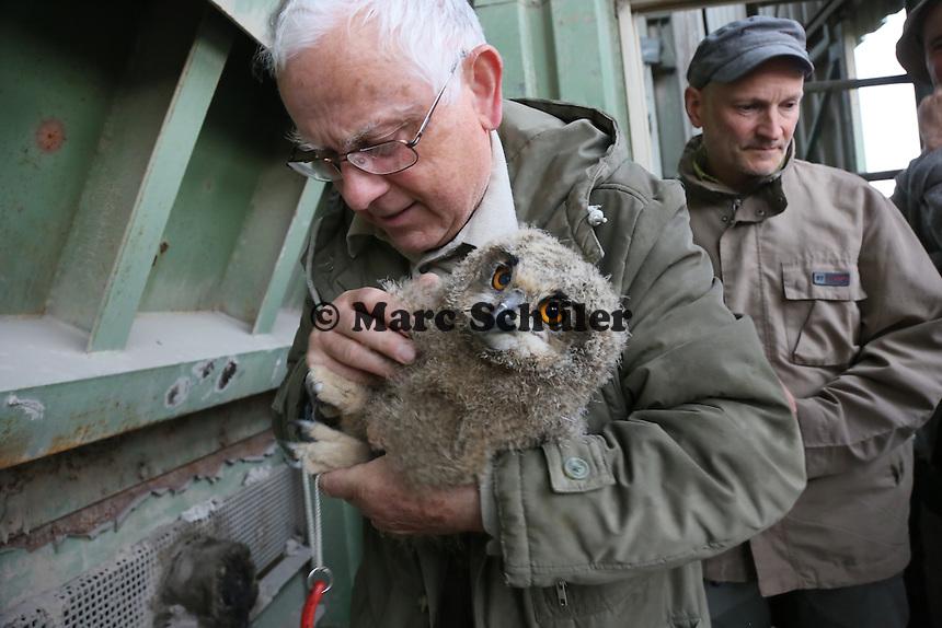 Klaus Hillerich von der Vogelwarte Helgoland beringt die jungen Uhus am Abfallzentrum Büttelborn, Doro Hofmann, sowie Stefan Leimbach und Matthias Werner (beide NABU) sehen zu