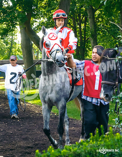 Quick Sand AA before The Arabian Juvenile Championship (grade 3) at Delaware Park on 9/24/16