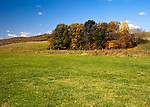 A colorful stand of trees wearing fall foliage decorates the hill and punctuates fields around Davis Valley Winery.