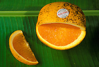 Close-up of a locally grown Kau Gold naval orange, sliced open, sitting on a banana leaf. The mottled skin is a feature of the fruit, which is grown in volcanic soil on the southern part of the Island of Hawaii.