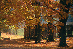 Autumn leaves fall on a country road, Knox County, OH