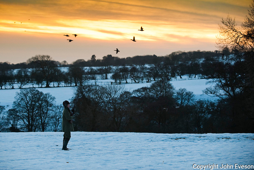 Shooting in snow, Lancashire. Ducks.