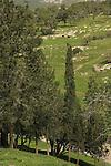 Israel, Jezreel Valley, Trees on Tel Shimron