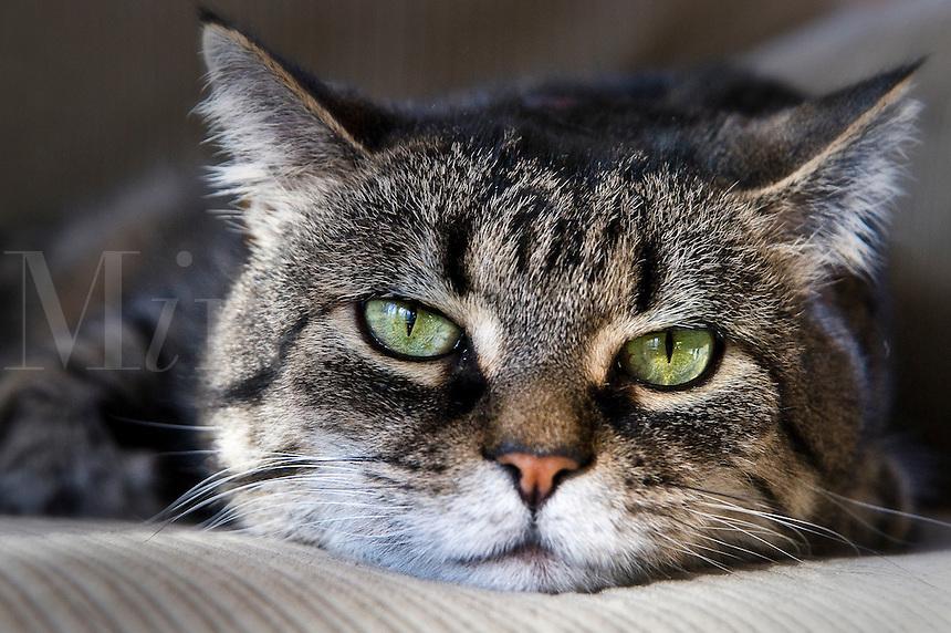 Resting cat.