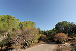 Israel, Shephelah. Scenery by Ayalon road in Park Canada