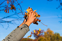 A male holding a handfull of autumn leaves against a clear blue indian summer sky