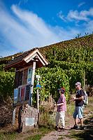 Germany, Baden-Wurttemberg, Black Forest, Gengenbach at Kinzig Valley: hiking through vineyards | Deutschland, Baden-Wuerttemberg, Schwarzwald, Gengenbach im Ortenaukreis: wandern in den umliegenden Weinbergen des Kinzigtals