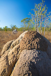 Termite mounds, Vansittart Bay, Kimberley Coast, Australia