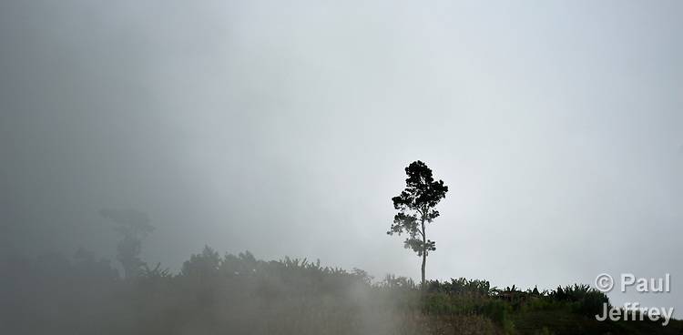 A tree on a hillside in the mountainous community of Foret-des-Pins, Haiti...