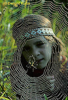 DW05-002z  Dew covered spider web, Garden spider, child viewing the spider