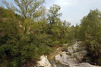 Greto del fiume.Shore of a river...