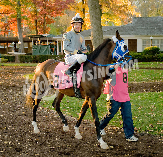 AF Smarty Pants  before The Delaware Park Arabian Classic Handicap on 11/5/11