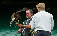 Rufus the Harrier Hawk on Centre Court on Ladies' Finals Day<br /> <br /> Photographer Ashley Western/CameraSport<br /> <br /> Wimbledon Lawn Tennis Championships - Day 12 - Saturday 15th July 2017 -  All England Lawn Tennis and Croquet Club - Wimbledon - London - England<br /> <br /> World Copyright &copy; 2017 CameraSport. All rights reserved. 43 Linden Ave. Countesthorpe. Leicester. England. LE8 5PG - Tel: +44 (0) 116 277 4147 - admin@camerasport.com - www.camerasport.com