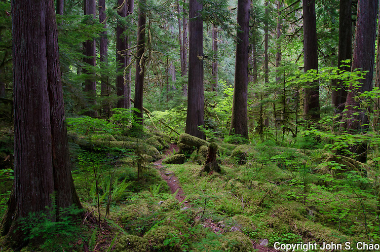 Trail leads through an evergreen forest to Newhalem Creek in North Cascades National Park, Washington State