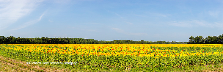 63801-06909 Sunflower field Sam Parr State Park Jasper County, IL