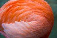 Flamingo abstract, Corpus Christi Aquarium