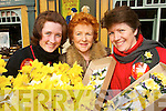 HELPING HAND: Martina Madden (Ballydonoghue), Rose Fitzmaurice (Listowel) and Kitty Madden from Ballydonoghue  who were some of the volunteers on the streets of Listowel raising funds for cancer during Daffodil Day on Friday last.