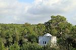 Israel, Mount Carmel, a view of Hof HaCarmel forest