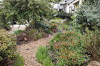 California native plant front yard garden in urban drought tolerant low maintenance small space lawn alternative,  pete veilleux design