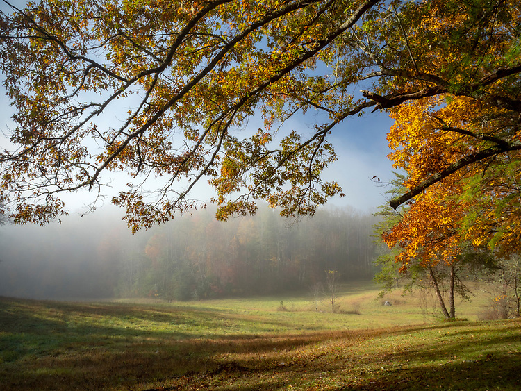 Morning fog burns off in a tree-lined meadow in Cades Cove in the Great Smoky Mountains National Park in Tennessee, USA